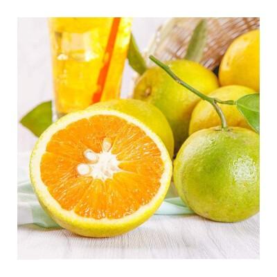 橙脐橙橙子水果
